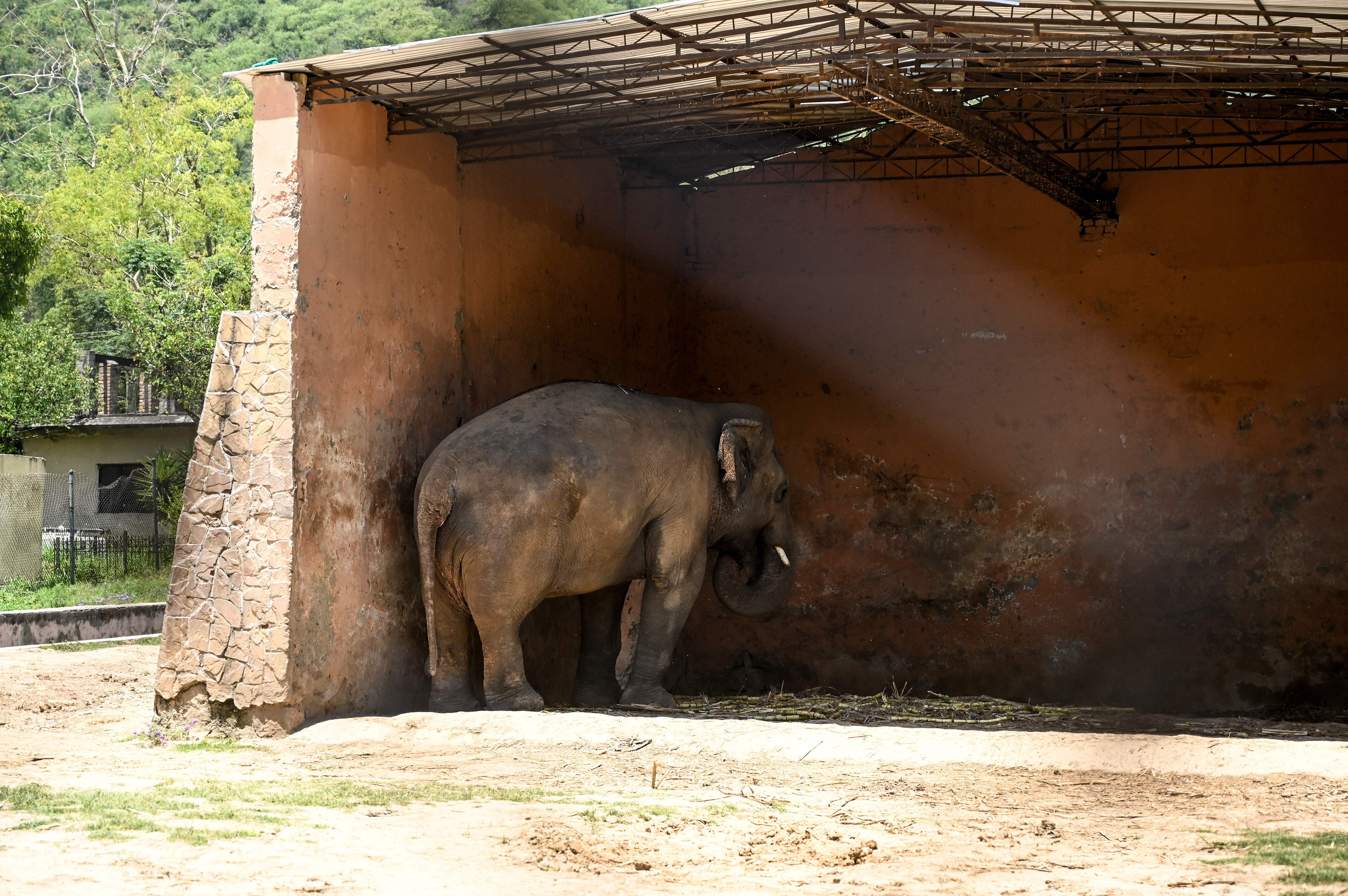'Nobody gave a damn': The ghosts of a neglectful, abusive zoo - independent