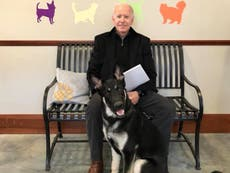 First dog Major Biden to be honoured with 'indoguration' ceremony before moving to White House