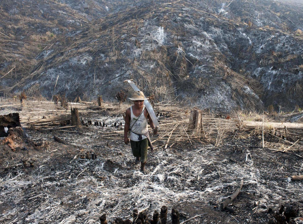 A worker carrying a saw where teak trees once grew in the Bago Region of Myanmar after the land was scorched ahead of replanting