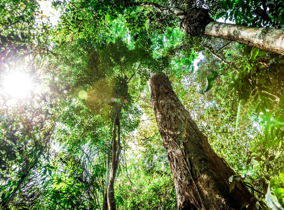 Land's ability to absorb CO2 is threatened by temperature rise