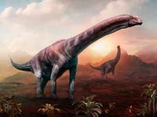 Argentina: Fósiles de dinosaurios encontrados pertenecerían a la criatura más grande de la historia de la Tierra