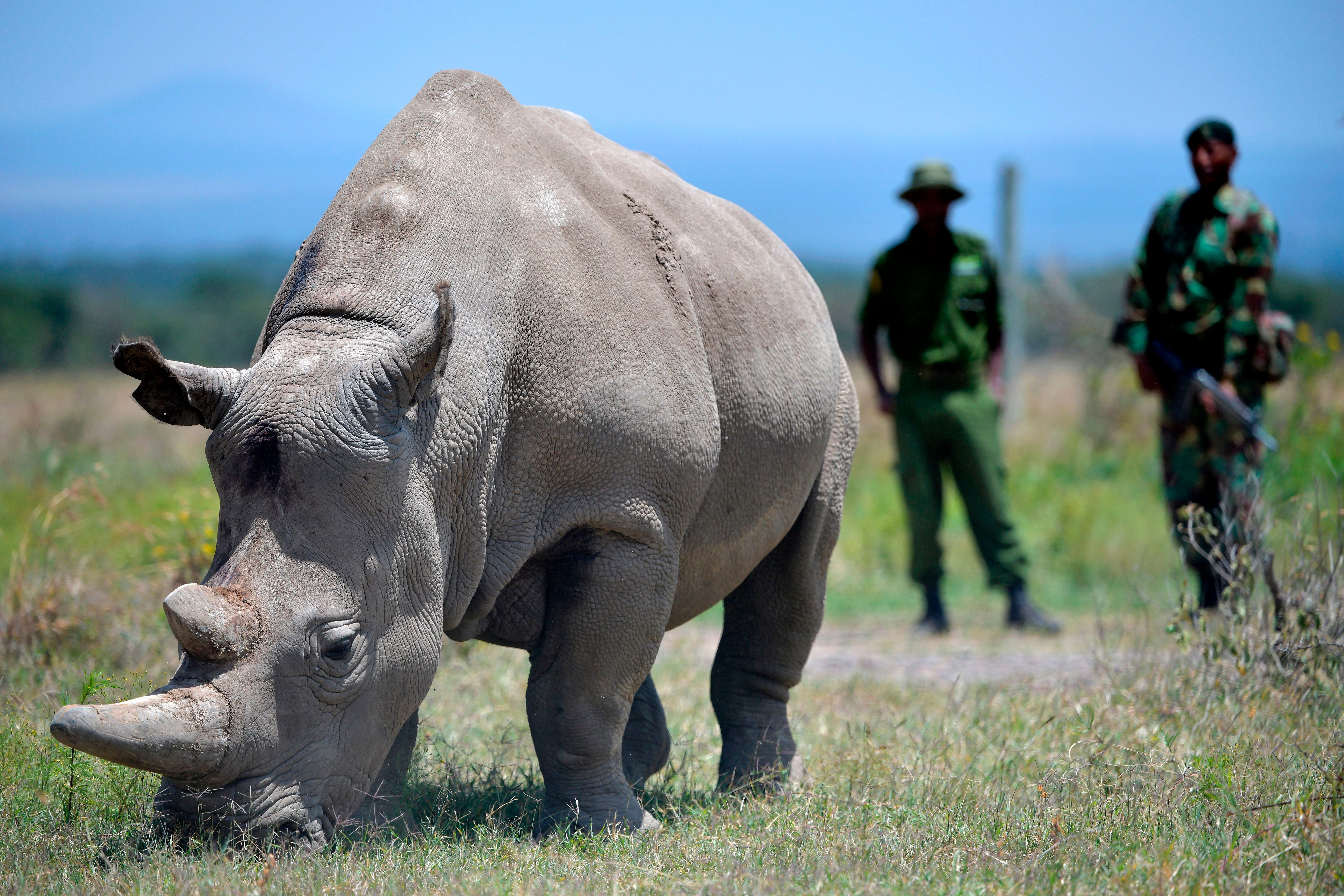 The former naval officer now leading Kenya's fight against poaching