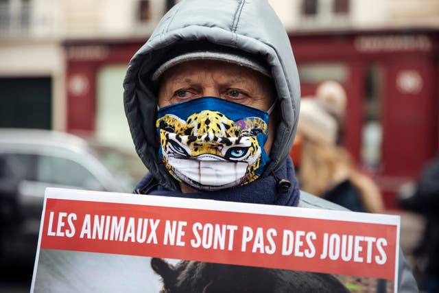 France Animal Abuse