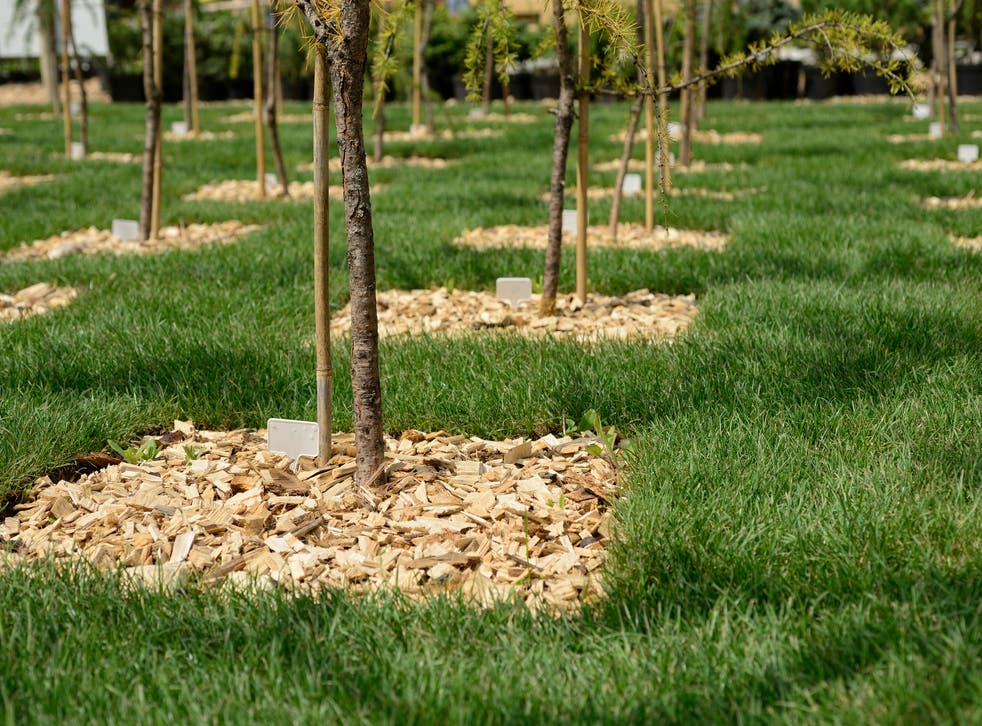 Tree planting can help to remove CO2 from the atmosphere
