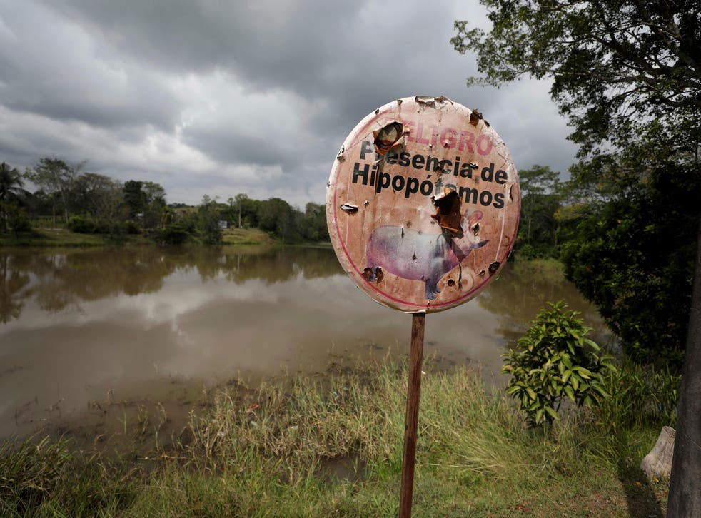 Colombia Culling Escobar's Hippos