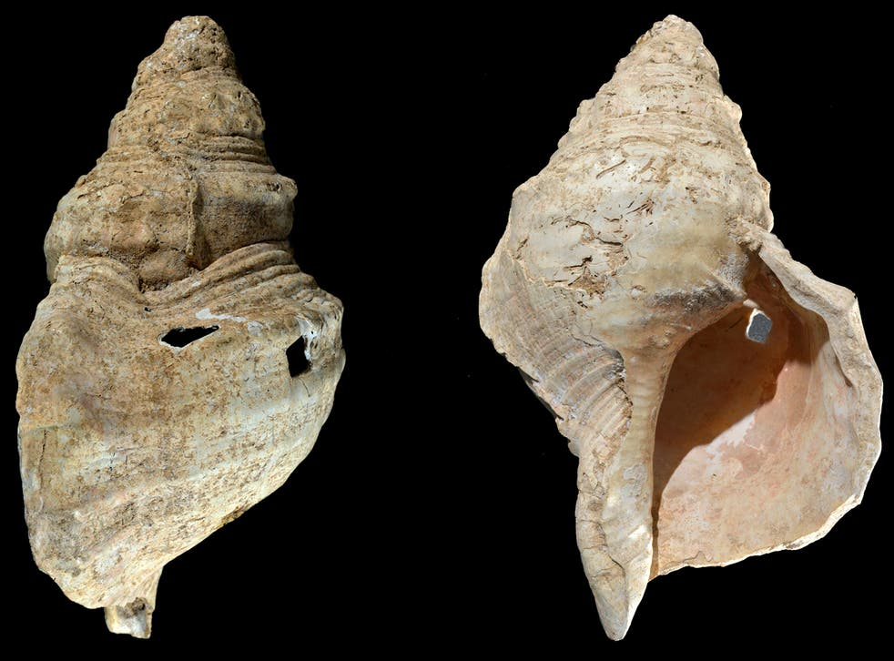 <p>This combination of photos provided by researcher Carole Fritz in February 2021 shows two sides of a 12-inch (31 cm) conch shell discovered in a French cave with prehistoric wall paintings in 1931</p>