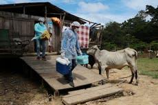 COVID: Gobernadores en Brasil buscan adquirir sus propias vacunas ante la escasez