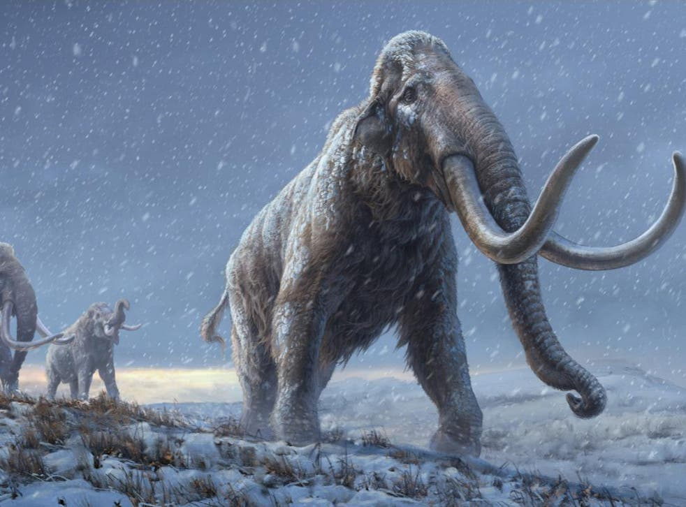 Reconstruction of the steppe mammoths that preceded the woolly mammoth, based on new genetic knowledge from the Adycha mammoth