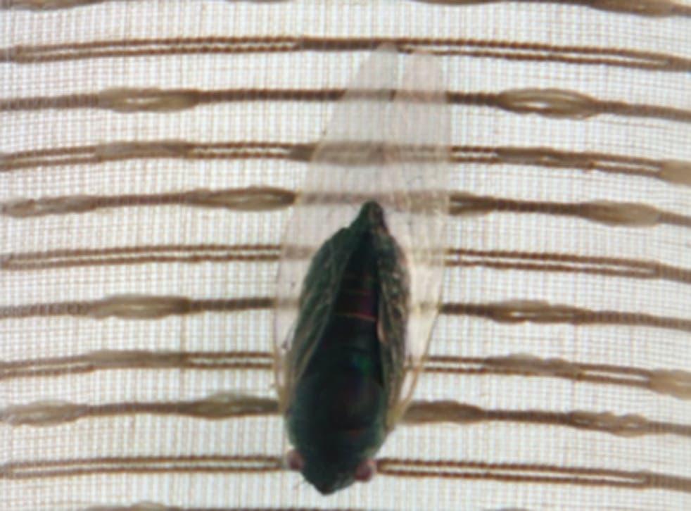 mephisto fly ile ilgili görsel sonucu