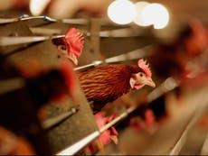 Rusia: Se detectan los primeros casos en humanos del virus de la gripe aviar H5N8