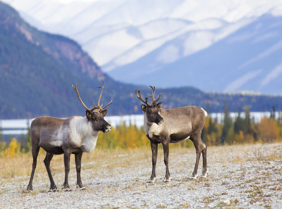 <p>Canada is one of seven new countries to go green </p>