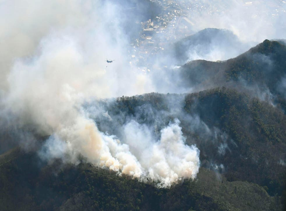 Japan Forest Fire