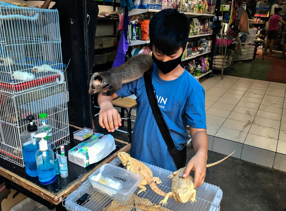 <p>A teenager with iquanas, badger and other animals in Chatuchak market, Bangkok</p>