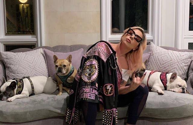 <p>Lady Gaga y perros</p>