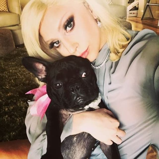 <p>Lady Gaga and her dog Miss Asia in 2015 </p>