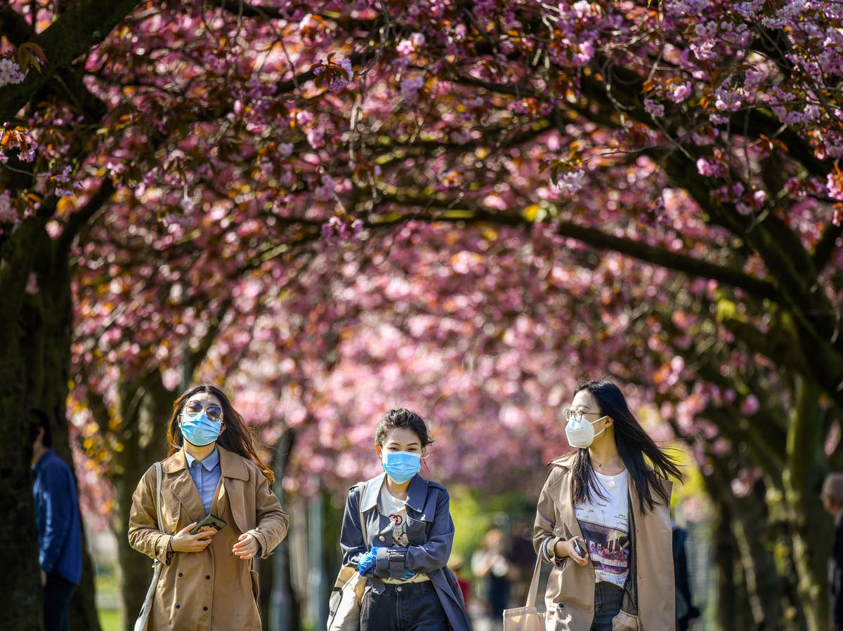 Blossoming trees to be planted across UK 'to help signal hope' after Covid pandemic