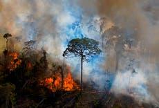 Parcelas de la selva amazónica se venden ilegalmente a través de Facebook