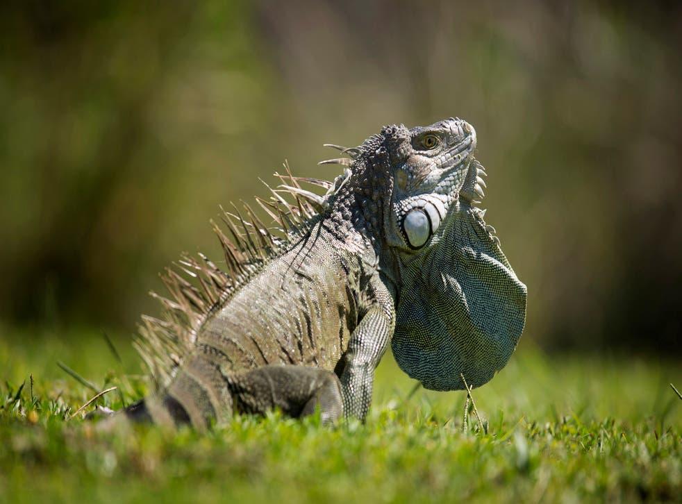 Banning Reptiles Florida