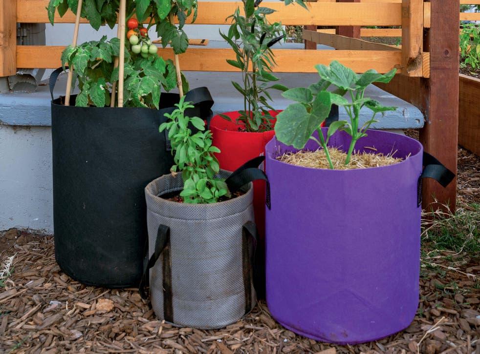 Plants in lightweight grow bags (Kevin Espiritu/PA)