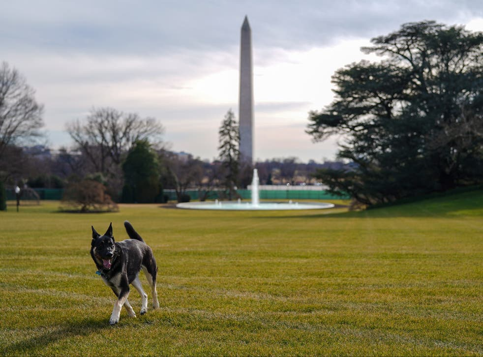 A handout photo made available by the White House shows First Dog Major outside the White House, in Washington, DC