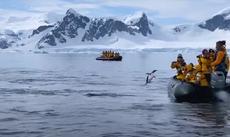 Pingüino escapa de orcas subiéndose a un barco lleno de turistas