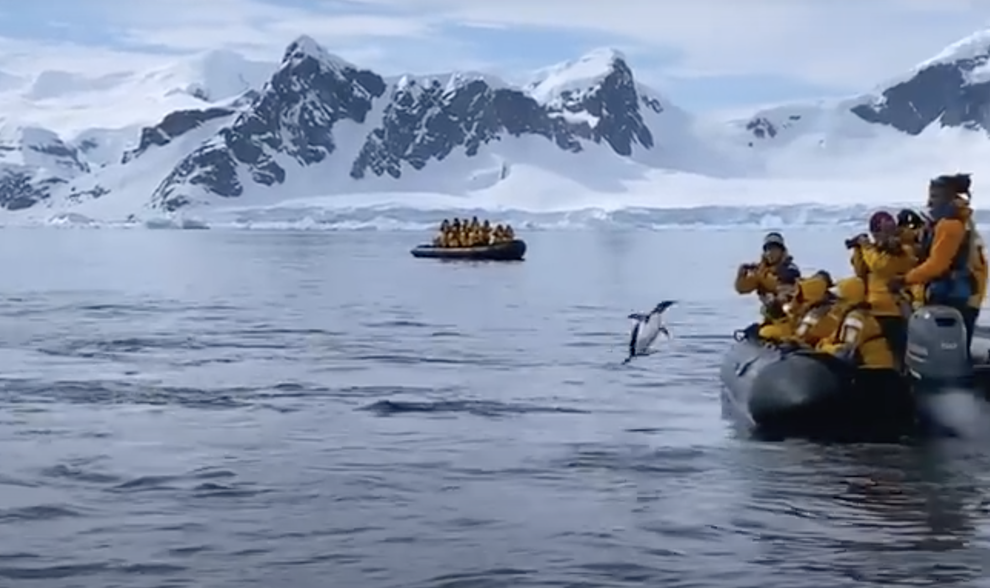 Penguin escapes killer whales by hopping onto boat full of tourists
