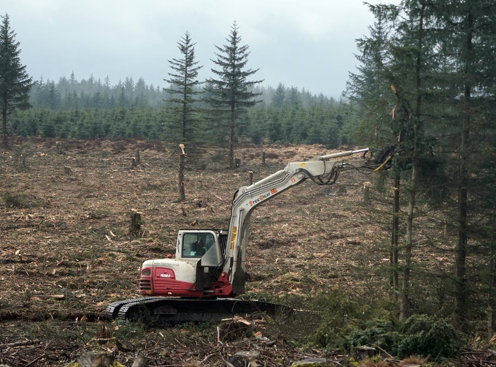 A vertical mulcher machine is used to clear trees during the restoration of an ancient bog near Kielder Water in Northumberland