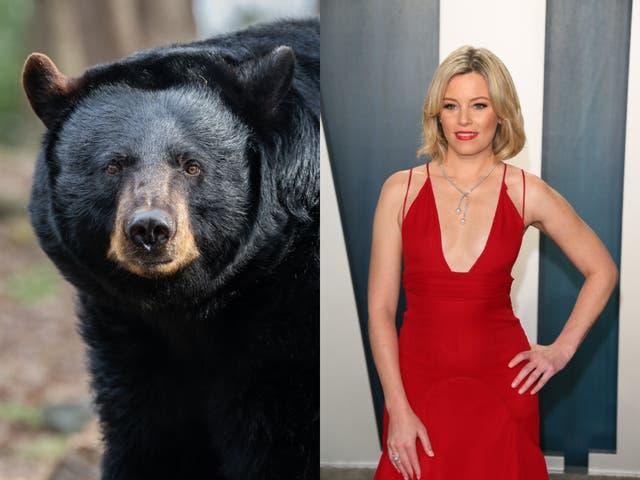 <p>La película Cocaine Bear está basada en un guion sin título escrito por Jimmy Warden y puede comenzar a rodarse este verano.</p>