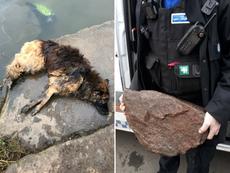 Dueña de perro que ató una piedra pesada a su mascota y lo tiró al río es multada con $110