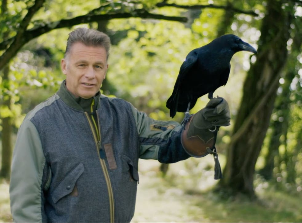 Chris Packham with Bran the raven - a species of bird with better problem solving skills than a five-year-old human child