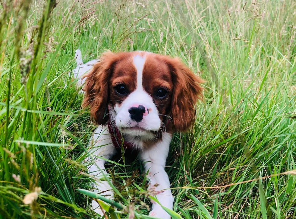 <p>Police have warned of the rise in dog theft by organised criminals as the demand for puppies continues to rise due to their increase in cost.</p>