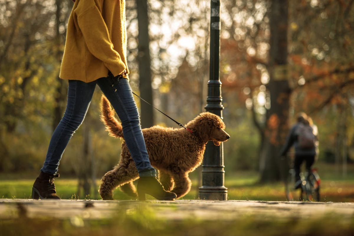 Dog owners scared to walk their pets due to rise of kidnappings in lockdown