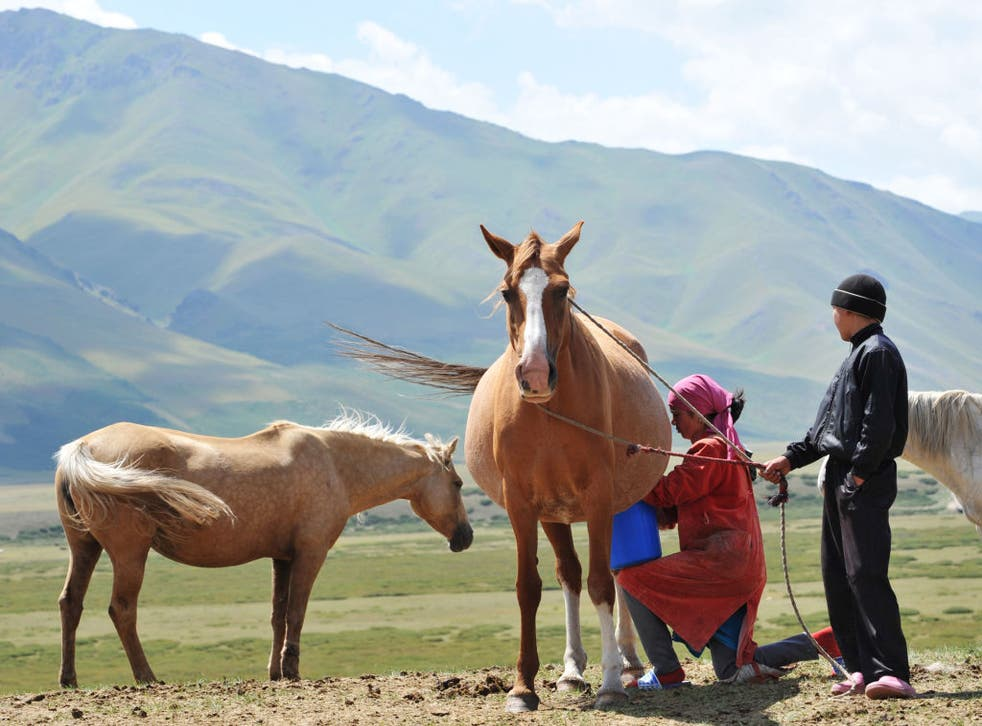 <p>A Kyrgyz woman milks a mare on the Suu-Samyr plateau – but will horse's milk catch on in the UK?</p>
