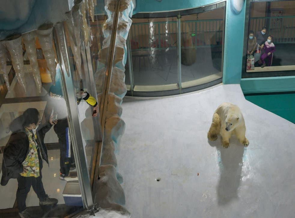 <p>People look at a polar bear inside an enclosure at a newly-opened hotel, which allows guests views of the animals - listed as a vulnerable species by the International Union for Conservation of Nature (IUCN)</p>