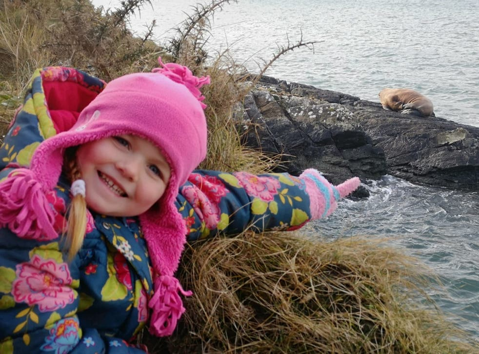 Five-year-old Muireann Houlihan points out the walrus along the coast of Valentia Island (Alan Houlihan)