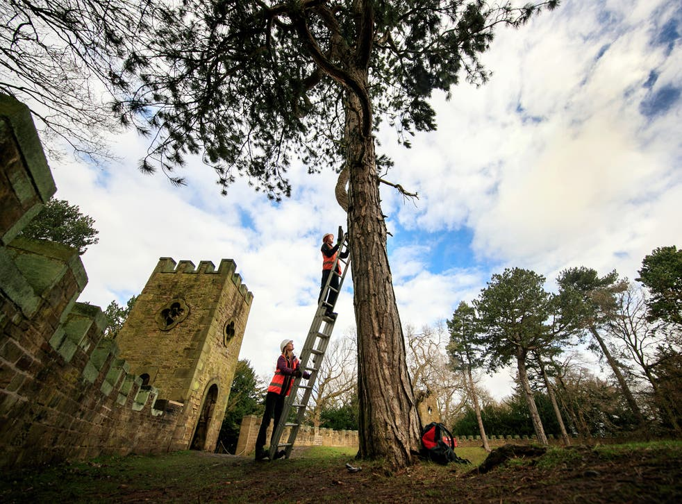Ecologist Robert Bell installing a bat box in the grounds of Stainborough Castle, an 18th-century folly at Wentworth Castle (Danny Lawson/PA)