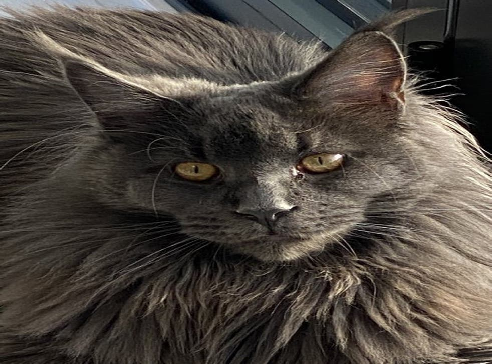 Columbo the cat