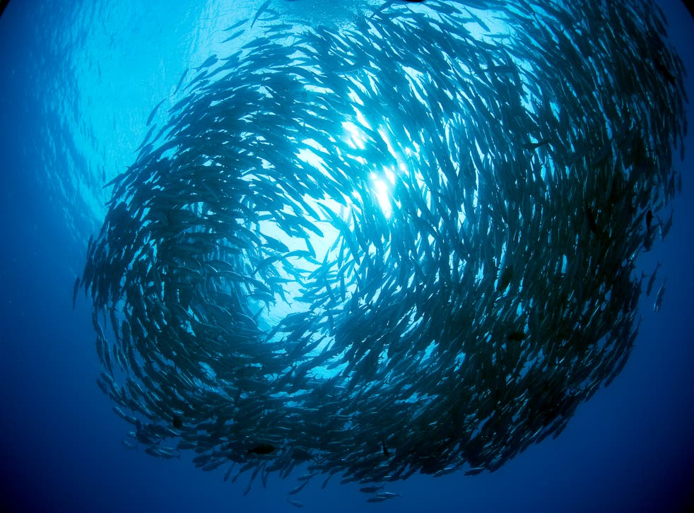 <p>Protecting even 29 per cent of the ocean would secure 8.3 million tons of extra seafood, according to a comprehensive new study</p>