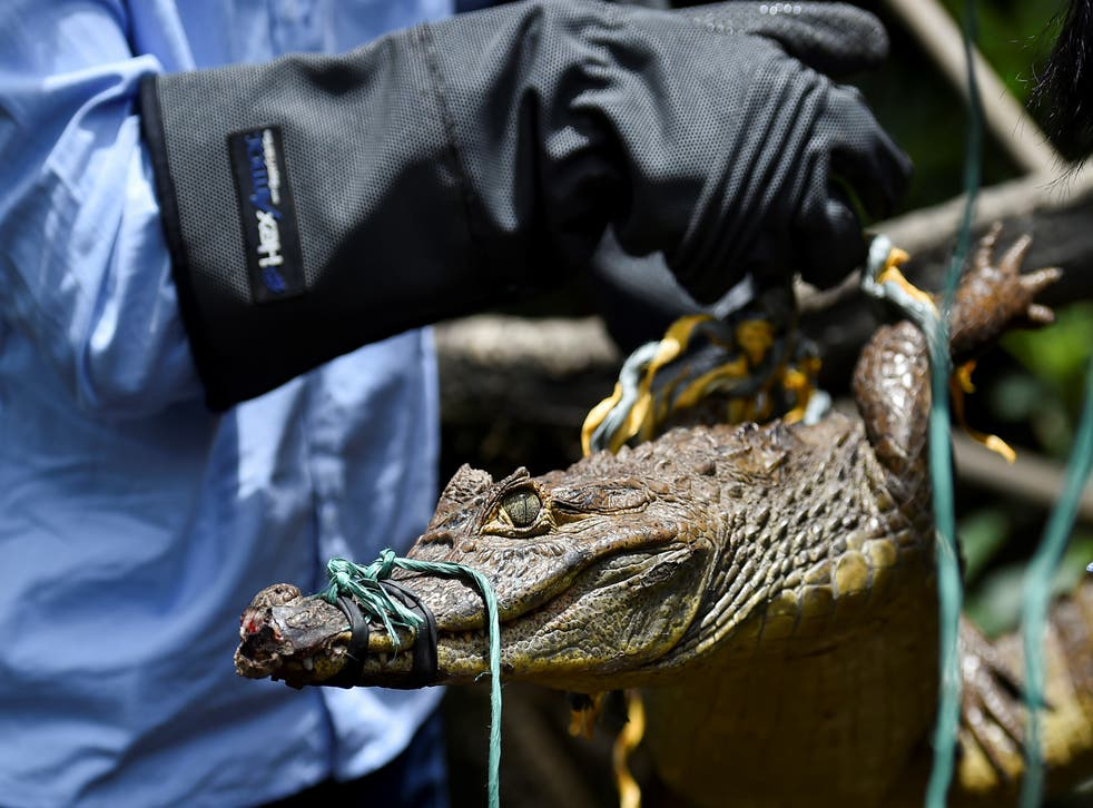 <p>File Image: Environmental authorities in Colombia released about 1800 animals of different species in different areas of the country, who were recovered of illegal wildlife trafficking</p>