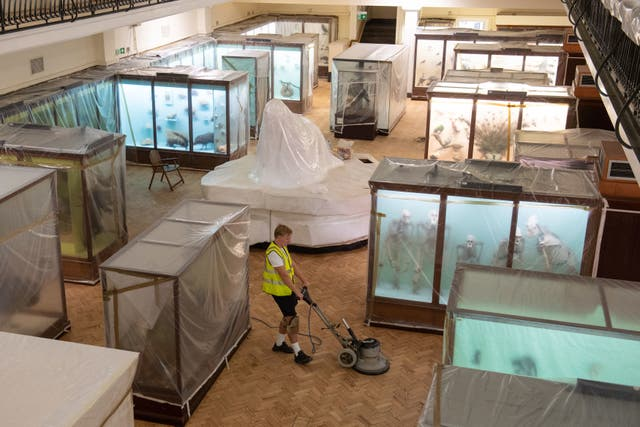 The Horniman Museum in London, which had the newly discovered shrimp named after it