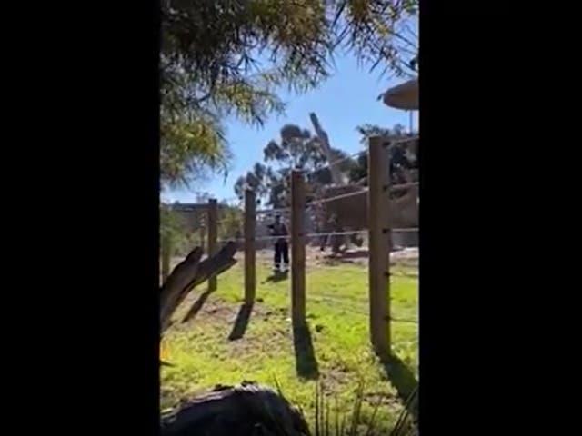 <p>José Navarrete, de 25 años, fue arrestado después de supuestamente llevar a su hija pequeña al recinto de elefantes en el zoológico de San Diego.</p>