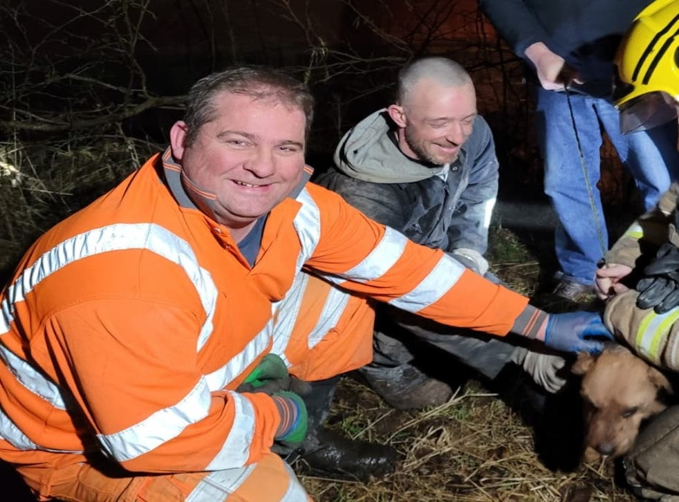 Pet dog Bailey is rescued