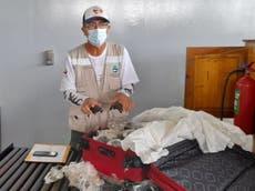 Ecuador: Hallan 185 tortugas en una maleta en el aeropuerto de Galápagos
