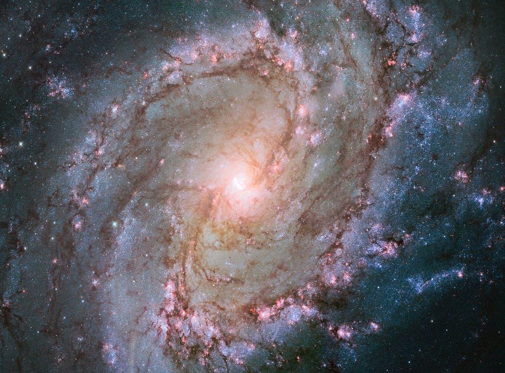 <p>The Water Snake's hidden gem, the spiral galaxy M83</p>