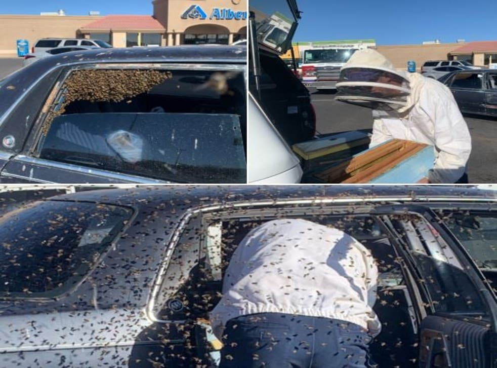 <p>The car was swarmed by 15,000 bees and an off shift firefighter was called in to help because he is a beekeeper in his spare time</p>
