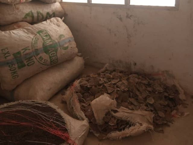Thousands of pangolin scales disguised as foodstuffs were seized at Cameroon's border with Nigeria