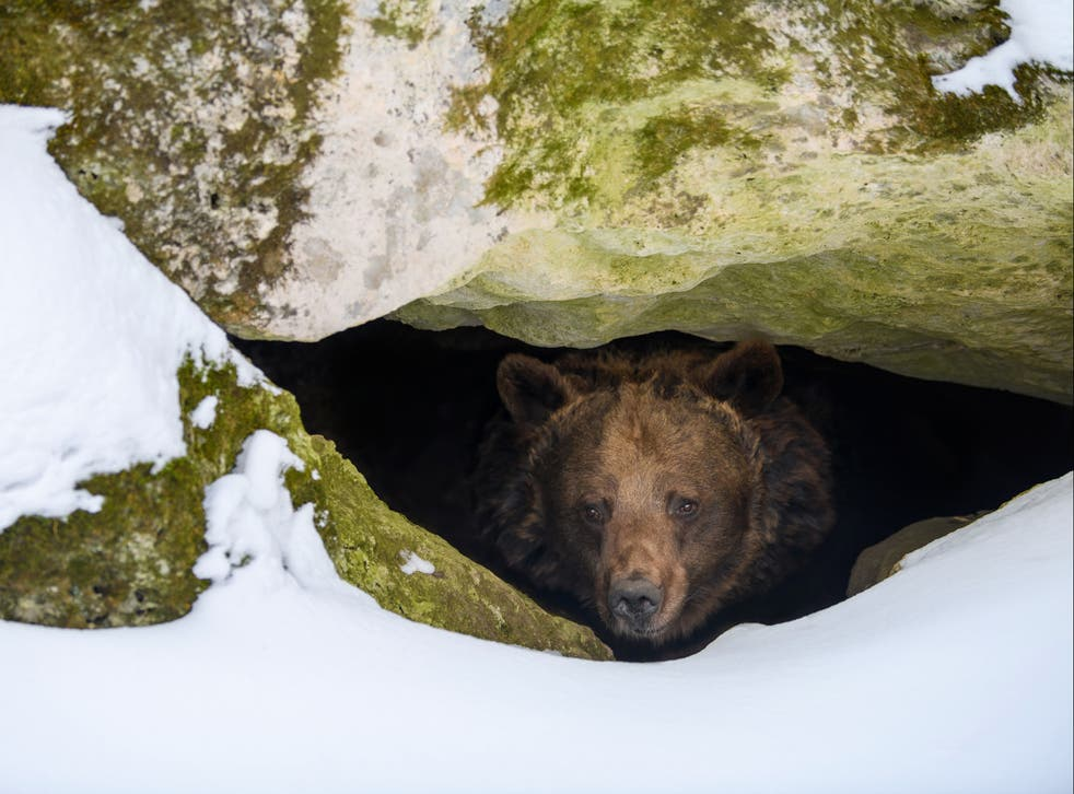 <p>As temperatures get warmer, cues to wake up after a long winter may come earlier, but food may not be available once the animals wake up</p>