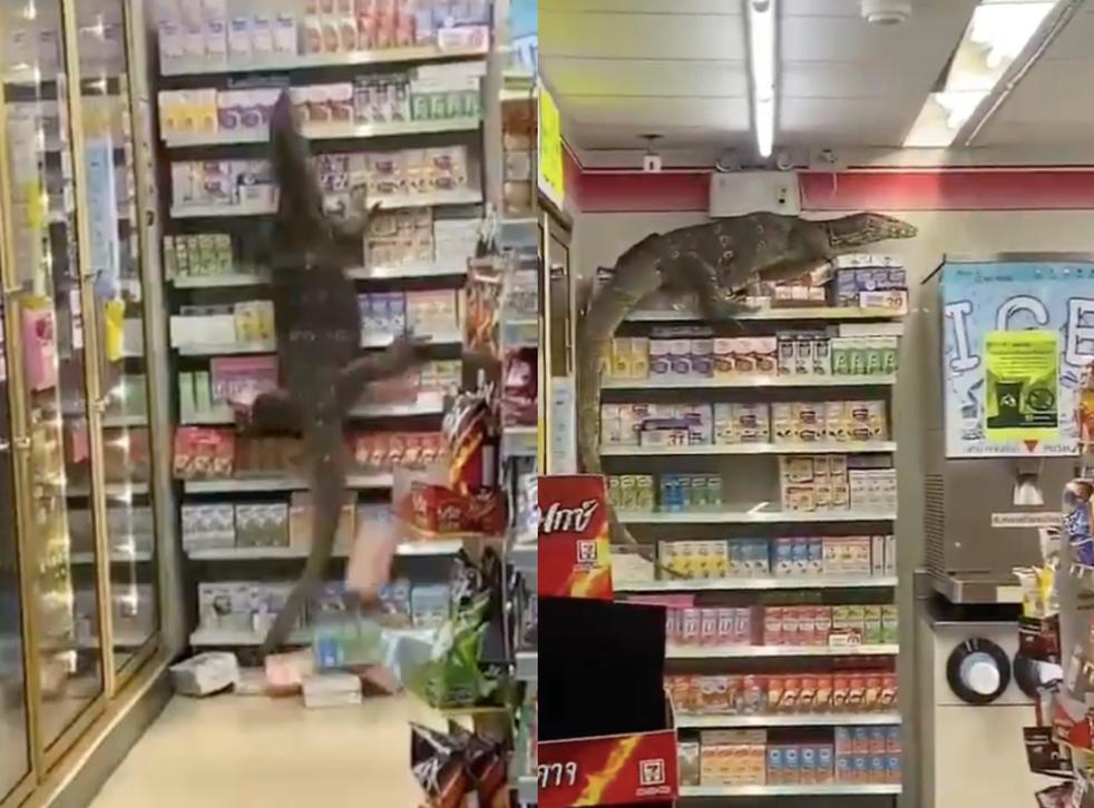 Footage captures moment giant lizard runs wild in Thai supermarket | indy100