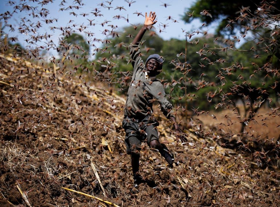 Kenya Locust Outbreak