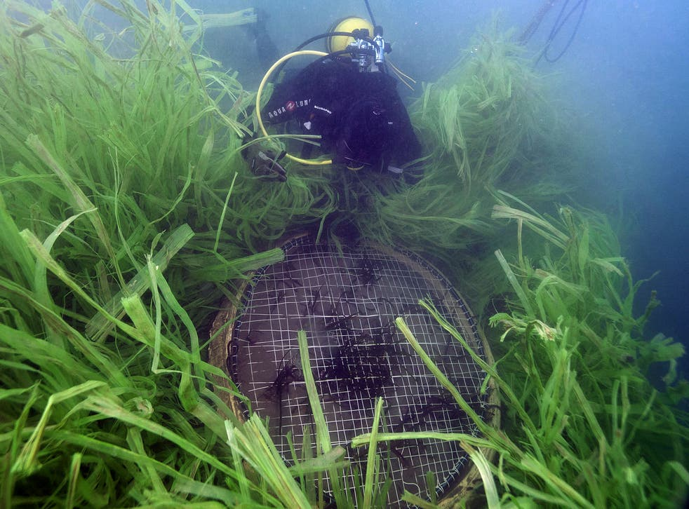 <p>'There are a lot of unknowns - even things as simple as how much seagrass we have'</p>